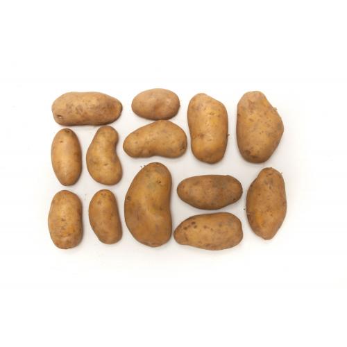 Suhrentaler Bio-Kartoffeln mehligk. ungewaschen