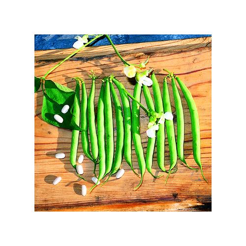 Buschbohnen Samen, Wunderfein