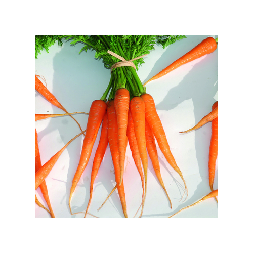 Frühkarotten Samen, Tip Top