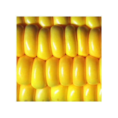 Zuckermais Samen, Golden Bantam