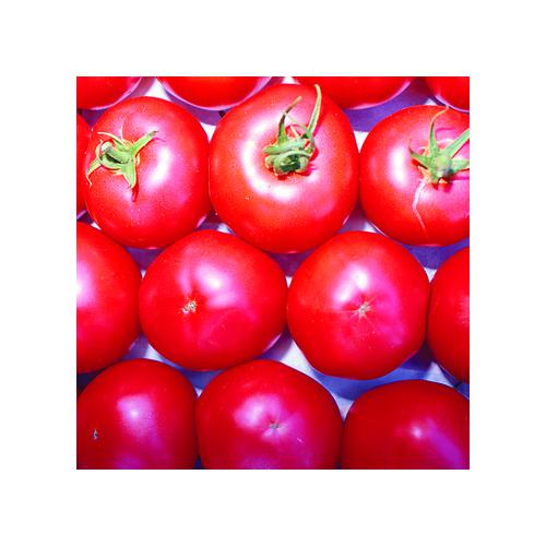 Tomaten Samen, Berner Rosen