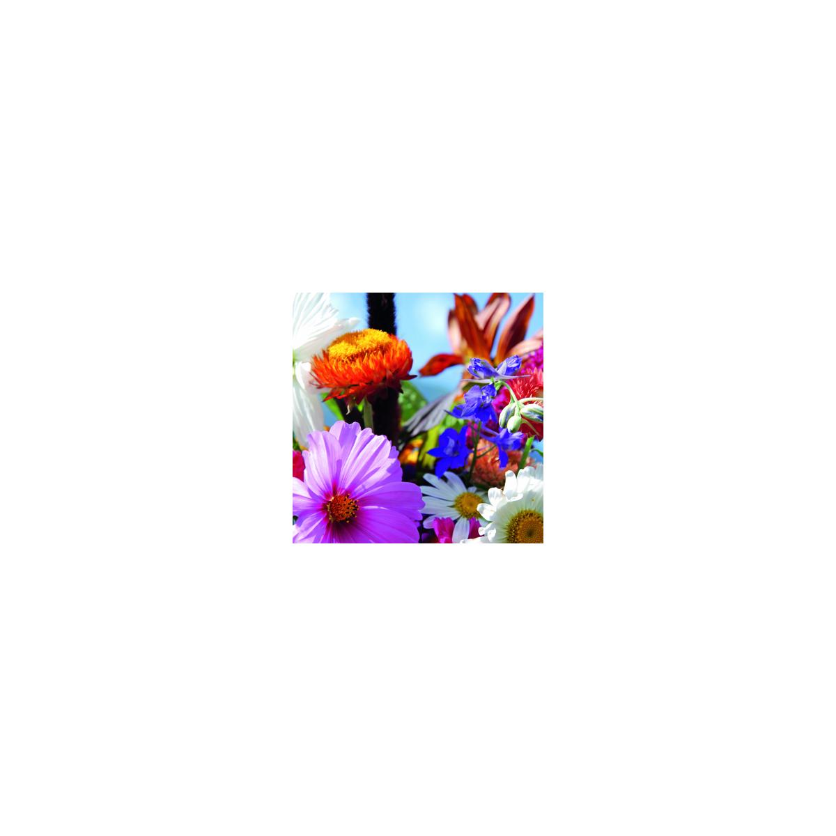 Blumenmischung, Gartentraum einjährig