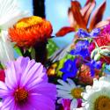 Blumenmischung Samen, Gartentraum einjährig
