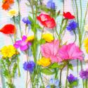 Bienenmischung Samen, Nectar plus einjährig