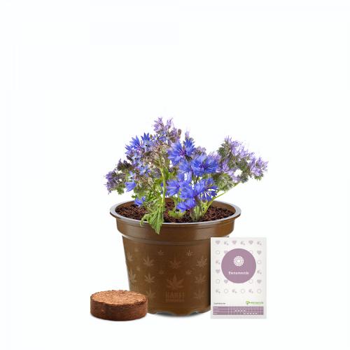 Bienenweide Bio Blumen-Anzuchtset