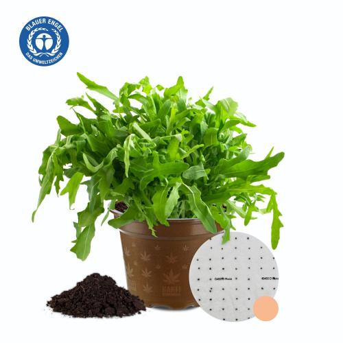 Rucola Bio Gemüse-Anzuchtset