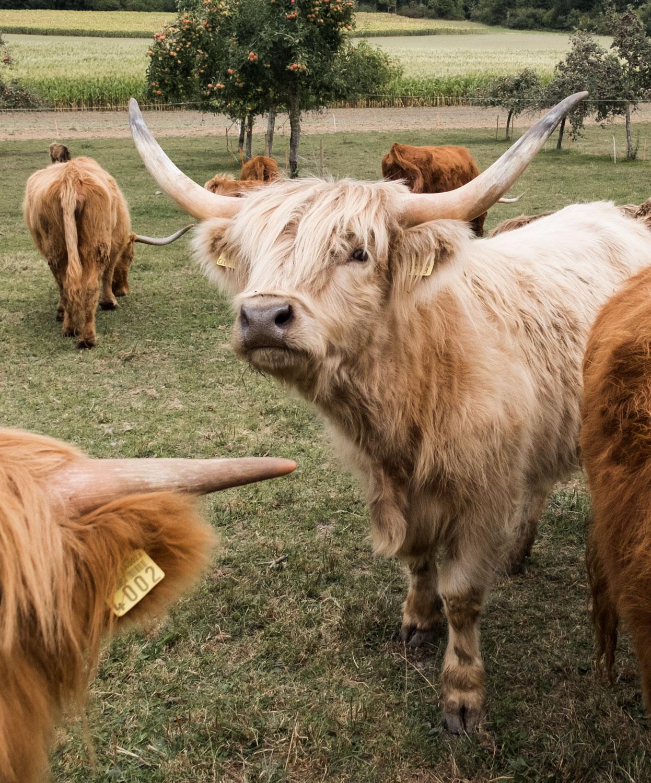 Darum ist Biofleisch besser